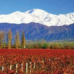 Vinhos em Mendoza